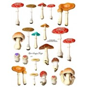 Mushrooms 245